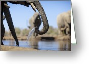Waterhole Greeting Cards - African Elephant At Waterhole, Mashatu, Botswana Greeting Card by Heinrich van den Berg