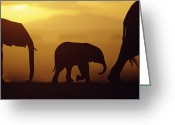 Infant Photo Greeting Cards - African Elephant Loxodonta Africana Greeting Card by Karl Ammann