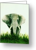 Elephant Watercolor Greeting Cards - African Elephant Greeting Card by Michael Vigliotti