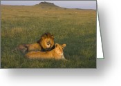 Maasai Mara Greeting Cards - African Lion Couple In Maasai Mara Greeting Card by Suzi Eszterhas