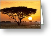 Tree. Acacia Greeting Cards - African Sunset Greeting Card by Richard Garvey-Williams