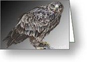 Bird Of Prey Digital Art Greeting Cards - African Tawny Eagle Greeting Card by Sheila Laurens