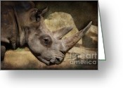 African Animals Greeting Cards - African White Rhinoceros Greeting Card by Saija  Lehtonen
