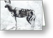 African Animals Greeting Cards - African Wild Dog Greeting Card by CarrieAnn Reda