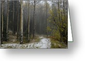 Santa Fe National Forest Greeting Cards - After A Hail Storm In The Santa Fe Greeting Card by Raul Touzon