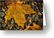 Folage Greeting Cards - After an Autumn Rain Greeting Card by David Patterson