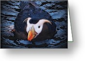 Oregon Wildlife Digital Art Greeting Cards - After The Bath Greeting Card by Alice Martin