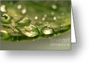 Surface Greeting Cards - After the rain Greeting Card by Sandra Cunningham