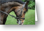 Dressage Photo Greeting Cards - After the Workout Greeting Card by Terry Kirkland Cook