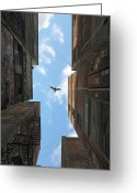 Raptor Greeting Cards - Afternoon Alley Greeting Card by Cynthia Decker