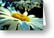 Wedding Flowers Ideas Greeting Cards - Afternoon Delight Greeting Card by Louie Rochon