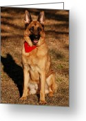 Purebreed Greeting Cards - Afternoon Portrait of a German Shepherd Greeting Card by Angie McKenzie
