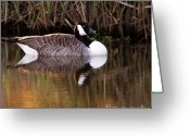 Wild Goose Greeting Cards - Afternoon Relax Greeting Card by Angel  Tarantella