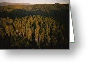 Del Norte Greeting Cards - Afternoon Sunlight Bathes Redwood Trees Greeting Card by James P. Blair