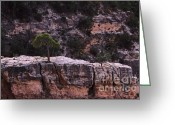 Grand Canyon Greeting Cards - Against All Odds Greeting Card by Viktor Savchenko