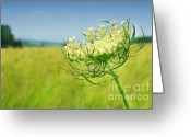 Warm Greeting Cards - Against the blue sky Greeting Card by Sandra Cunningham