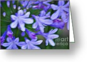 Delicate Bloom Greeting Cards - Agapanthus Greeting Card by Gwyn Newcombe