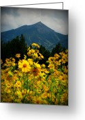 Tickseed Greeting Cards - Agassiz Peak High Above the Meadow Greeting Card by Aaron Burrows