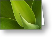 Koehrer-wagner_heiko Greeting Cards - Agave Greeting Card by Heiko Koehrer-Wagner