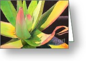 Southwestern. Greeting Cards - Agave Greeting Card by Robert Hooper