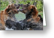 Grizzly Bears Greeting Cards - Agree To Disagree Greeting Card by Sandra Bronstein