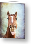 Neigh Greeting Cards - Ahhhhhh Greeting Card by Darren Fisher