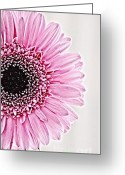 Daisies Photos Greeting Cards - Aile Greeting Card by Kristin Kreet
