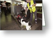 Explosives Greeting Cards - Airport Security, Explosives Detection Greeting Card by Ria Novosti