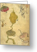 Featured Greeting Cards - Akbars Medicine, Internal Organs, 18th Greeting Card by Science Source
