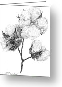 Botanical Drawings Greeting Cards - Alabama Cotton Greeting Card by Barney Hedrick