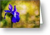 Textured Floral Greeting Cards - Alabama Iris Greeting Card by Darren Fisher
