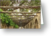 Alamo Greeting Cards - Alamo Walkway Greeting Card by Carol Groenen