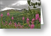Fireweed Greeting Cards - Alaskan Summer Greeting Card by Rick  Monyahan