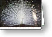 Albino Peacock Greeting Cards - Albino White Peacock Display Greeting Card by Kimberly Blom-Roemer