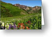 Clear Photo Greeting Cards - Albion Basin Wildflowers Greeting Card by Rob Daugherty - RobsWildlife.com