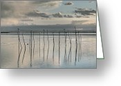 Flooded Greeting Cards - Albufera gris. Valencia. Spain Greeting Card by Juan Carlos Ferro Duque