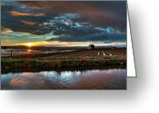 Flooded Greeting Cards - Albufera rice. Valencia. Spain Greeting Card by Juan Carlos Ferro Duque
