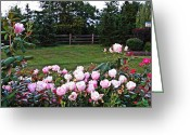 Rose Bushes Greeting Cards - Aldas Rose Garden Greeting Card by Sarah Loft