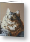 Coon Greeting Cards - Alexi Maine Coon Greeting Card by Barbara Groff
