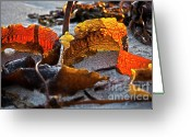 Ebb And Flow Greeting Cards - Algae at low tide Greeting Card by Heiko Koehrer-Wagner