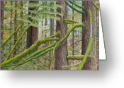 Woods Pastels Greeting Cards - Alger Forest Greeting Card by James Geddes