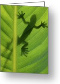 Lizard Greeting Cards - Alive Greeting Card by Dan Holm