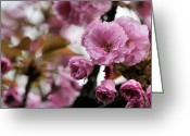 Pink Carnations Greeting Cards - All About Pink Greeting Card by JC Findley