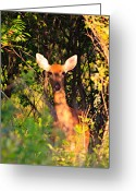 Brown Leaf Greeting Cards - All Ears Greeting Card by Robert Pearson