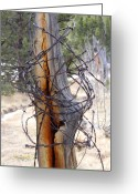 Barbed Wire Fences Photo Greeting Cards - All in a Tangle Greeting Card by Cynthia  Cox Cottam
