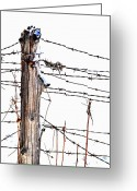 Barbed Wire Fences Photo Greeting Cards - All Wired Greeting Card by Emily Stauring