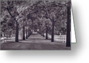 Tree Allee Greeting Cards - Allee Way BW Greeting Card by Steve Gadomski