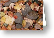 U.s. National Forest Greeting Cards - Allegheny Leaf Litter Greeting Card by Gerry Ellis