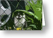Streets Of Montreal Greeting Cards - Alley Cat Greeting Card by Reb Frost