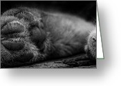 Power Lines Greeting Cards Greeting Cards - Alley Kat Nap Greeting Card by Jerry Cordeiro
